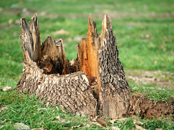 Stump Removal Image